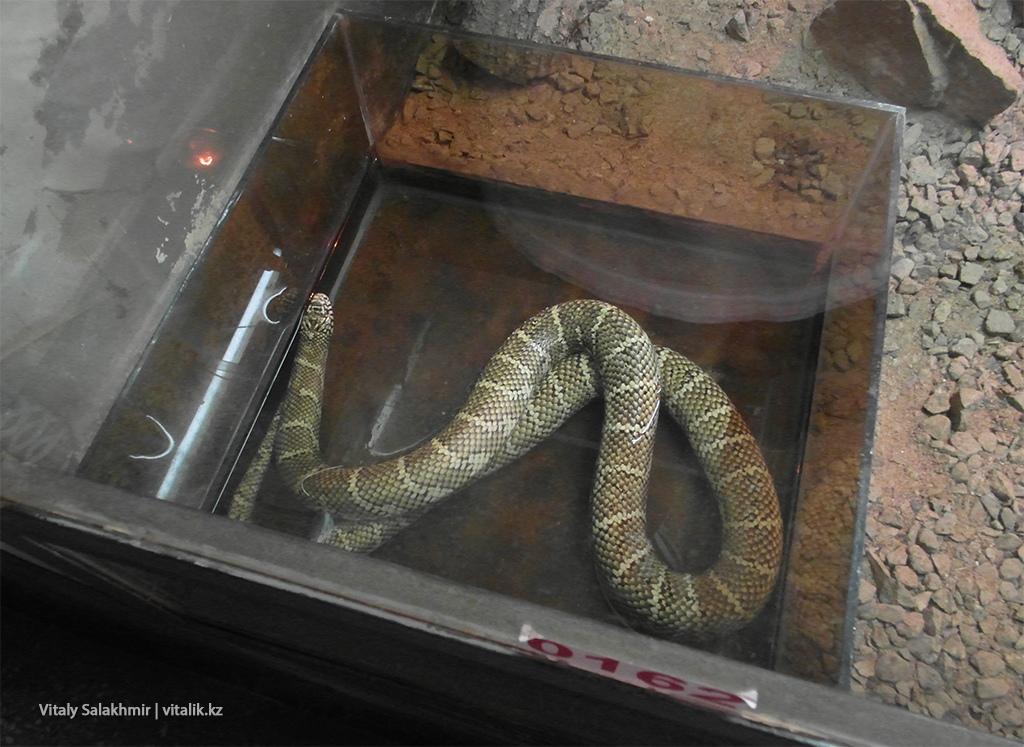 Змея в воде, зоопарк Алматы