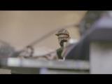 James Lo Scott - Ночь не слышно городского шума (Live in FLAT15)