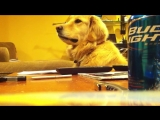 Собакен, который любит блюз