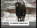 В Ивановской области цирк-шапито уехал, бросив животных гибнуть на морозе
