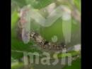 В Адыгее гусеницы съели реликтовые леса на 53 миллиарда рублей