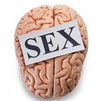 Секс в мозгу