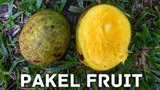 PAKEL FRUIT THE BALINESE WILD MANGO
