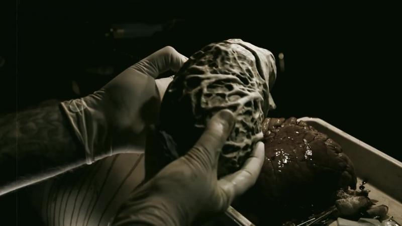 Almah - Trace of Trait - Official Video