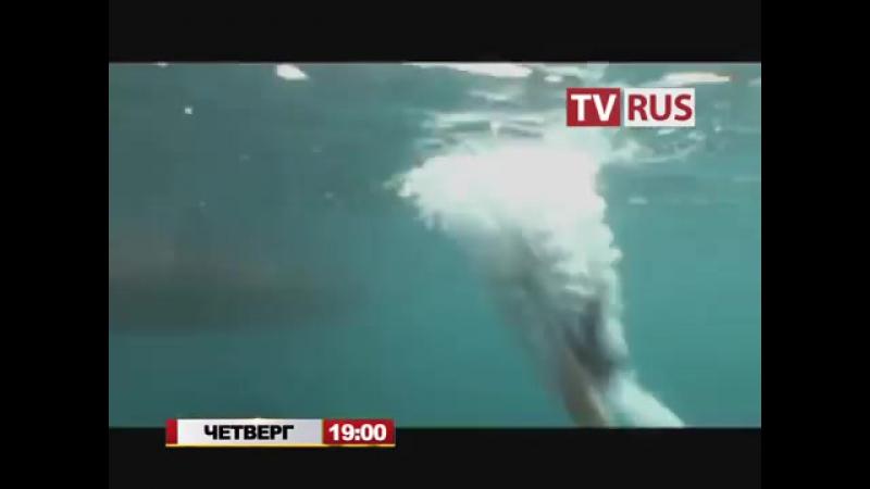 Анонс Т-с Бухта пропавших дайверов Телеканал TVRus