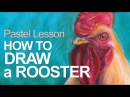 Pastel Lesson - How to Draw a Rooster