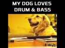 When your dog loves Drum and Bass Funny Videos 2015
