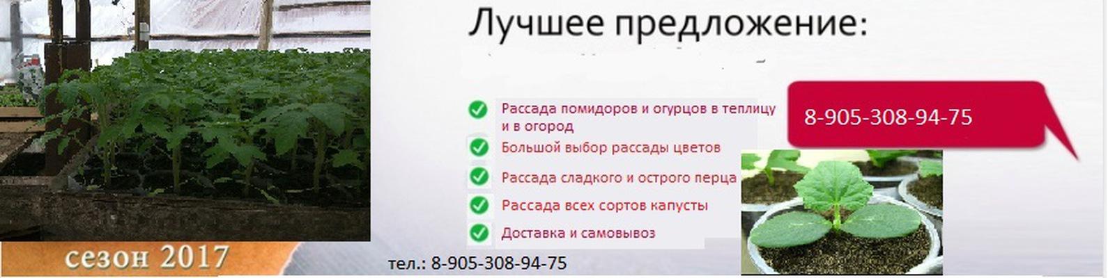 Продажа рассады реклама 63