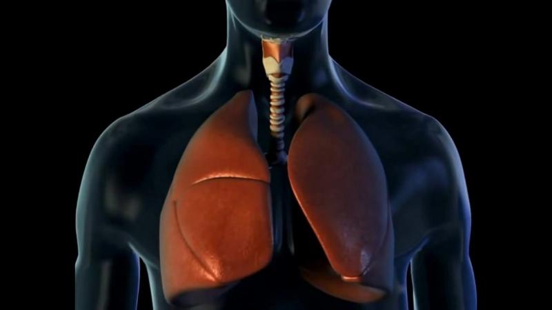 Гифка дыхание человека