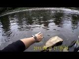 Прогулка по Охте в поисках рыболовного счастья.
