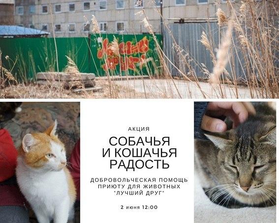 c53b23df0115 Добровольцев снова зовут прибраться в вольерах у собак и кошек приюта  «Лучший друг», а также пообщаться с животными. Нужно прийти в рабочей  одежде и обуви, ...