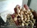 Inchi Nut Hulling Production LineSunflower Seeds Shelling Line