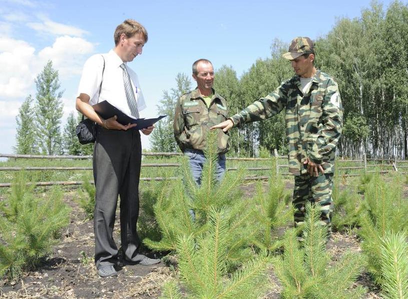 В Зеленчукском районе появится лесной питомник