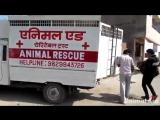 Спасение собаки, люди, будьте добрее!