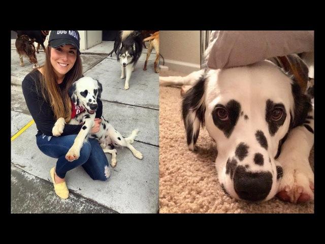 Пёс признается в любви хозяйке без слов, ей просто достаточно взглянуть на его глаза!