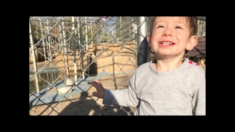 VLOG: Парк птичек, Ливанская ярмарка / Иордания