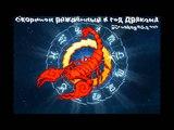 Скорпион рождённый в год Дракона