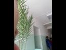 Учебная пожарная тревога в первомайской больнице Бийского района 11.04.2018
