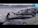Дельфины выбросились на берег и погибли