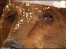В Самаре объявился владелец оставленных на стоянке медведей
