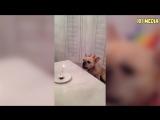 ПРИКОЛЫ 2017 Сентябрь #140 Самые Смешные Видео с Животными Угарные Собаки и Кошк