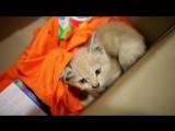 Благотворительный фонд помощи животным «Подбери друга» и Hills меняют жизнь к лучшему. Серия 3