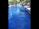 Фридайвинг. Тренировка в бассейне
