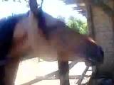 спирит (с этого коня и рисовался главный герой фильма )