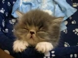 Sweet Tired Cat