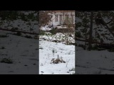 Кот убийца зайцев финал