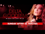'Wings Of The Wild' Tour on Channel 9 (The Voice Australia 2018)