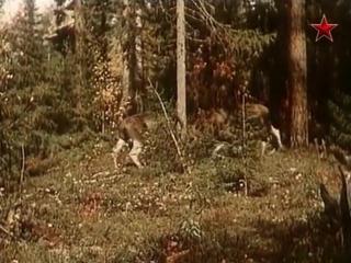 Повесть о лесном великане (1954) - семейный, фильм о животных, реж. Александр Згуриди