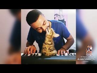 Пианист играет для своего кота