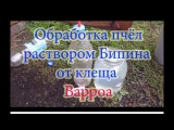 Обработка от клеща Варроа Бакфаста и Карники водным раствором Бипина и его резу ...