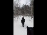 Конная прогулка по лесу в Боровухе-1.