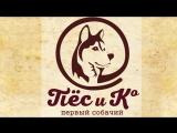 Запись Телеканал  «Пёс и Ко»