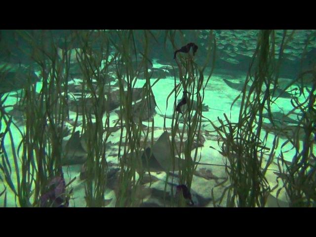 № 2084 Подводный Мир Sea World tour Orlando Fl USA 2012