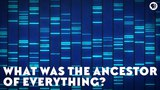 What Was the Ancestor of Everything (feat. PBS Space Time and Its Okay To Be Smart)
