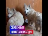 Российские моряки спасли щенков