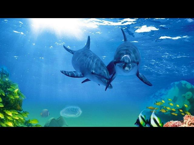 Поющие дельфины и киты Звуковая терапия Атмосфера подводного погружения Singing dolp