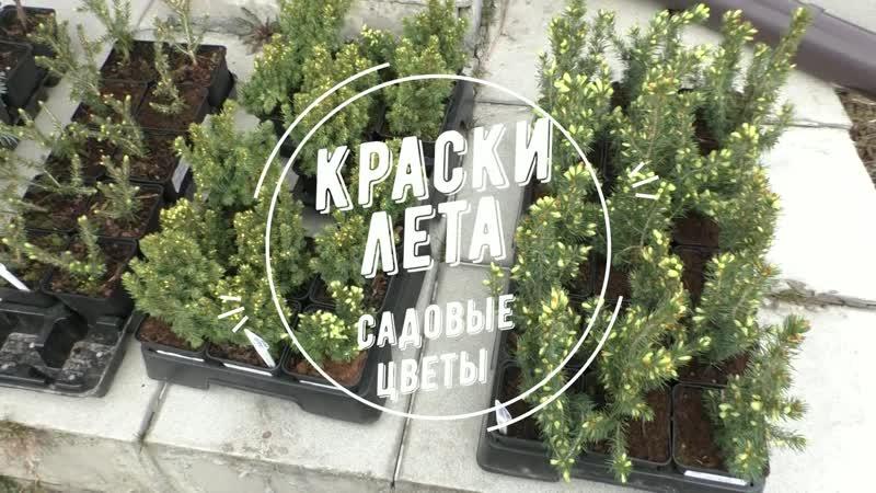 Ели Коника Майголд Ялако Голд Виллс Цверг Эрих Фрам