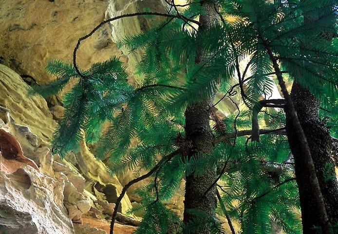 Национальный парк Вуллеми, изображение №2