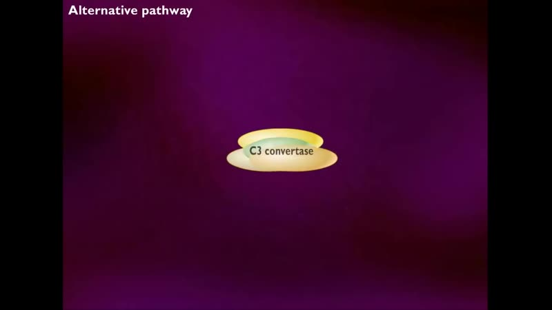 5Activation of Complement System HD Animation