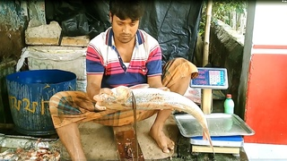 Amazing Big Carp Fish Cutting | Carp Fish Cutting into Pieces in   the Fish Market.