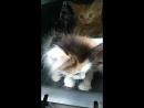 котята малышата в дар