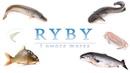 Ryby i owoce morza | Польська мова | Polski język | 4k