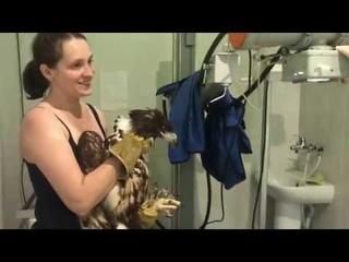 Орлан и ветеринары дубль два! Самца выпустили самку приняли.