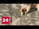Дворовый кот убил змею, переполошившую посетителей ТЦ в Волгограде - Россия 24