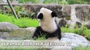 【Panda Billboard】Episode 97 | iPanda
