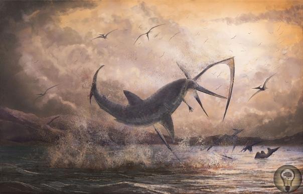 Обнаружен новый вид акулы возрастом 91 миллион лет